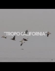 Tropo California